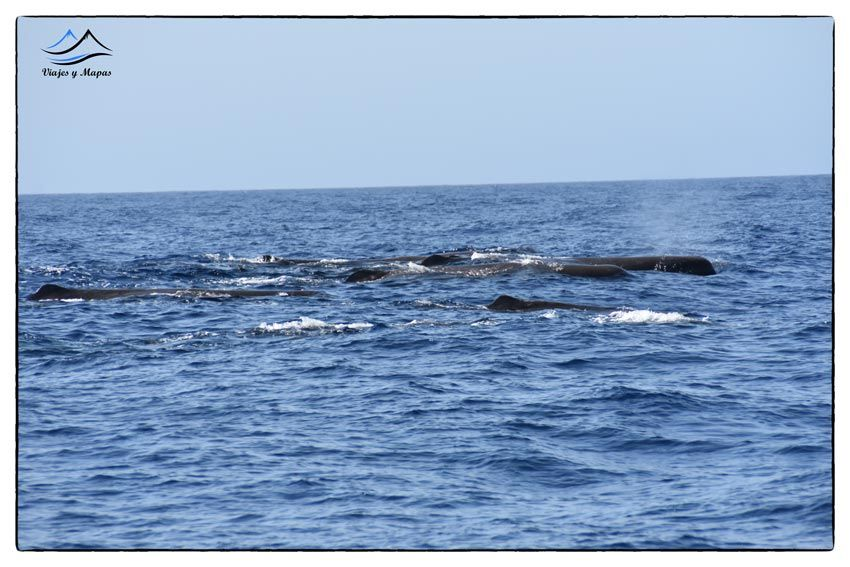 avistamiento-de-cetáceos-en-tenerife