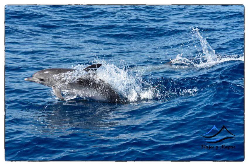 ver-delfines-y-ballenas-en-tenerife